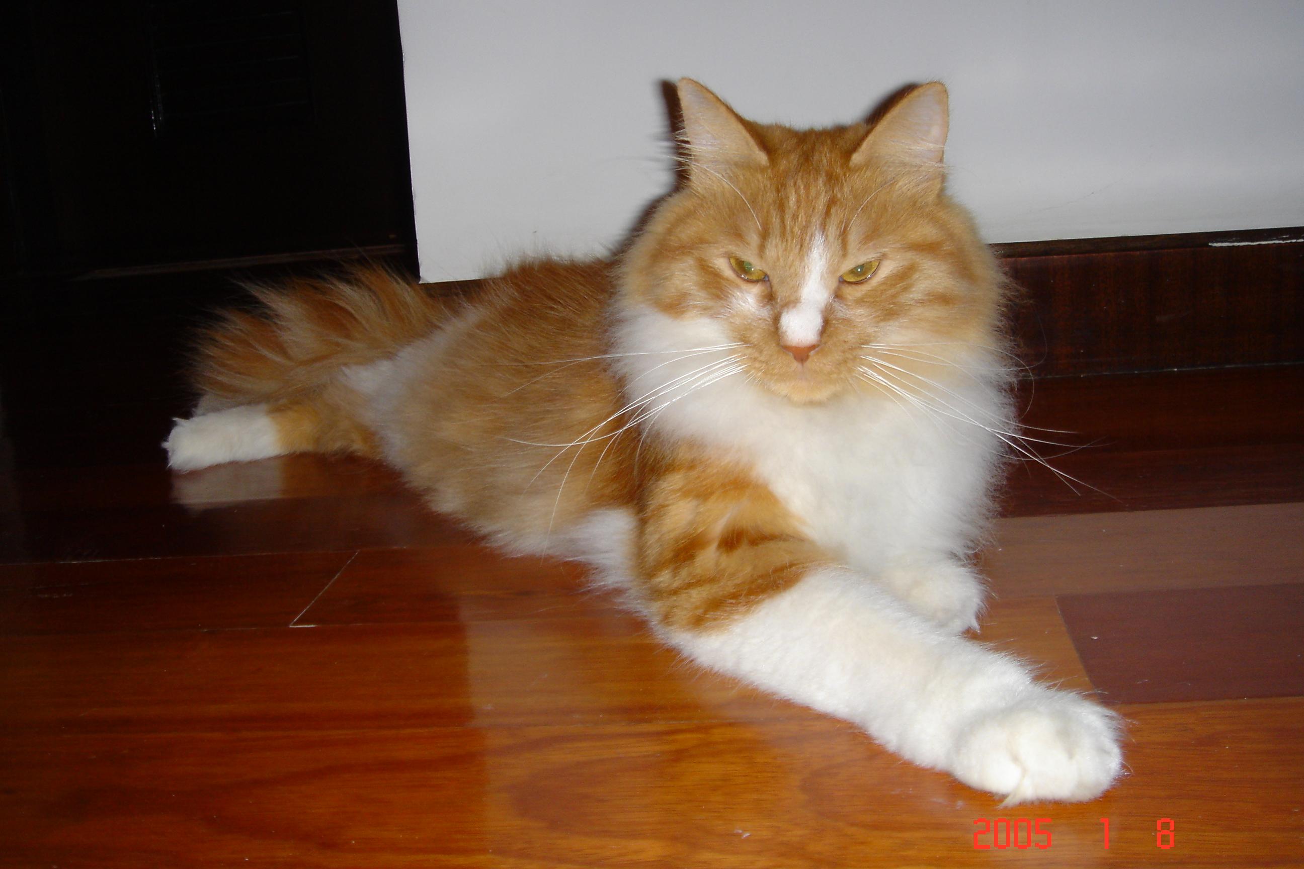 壁纸 动物 猫 猫咪 小猫 桌面 2592_1728